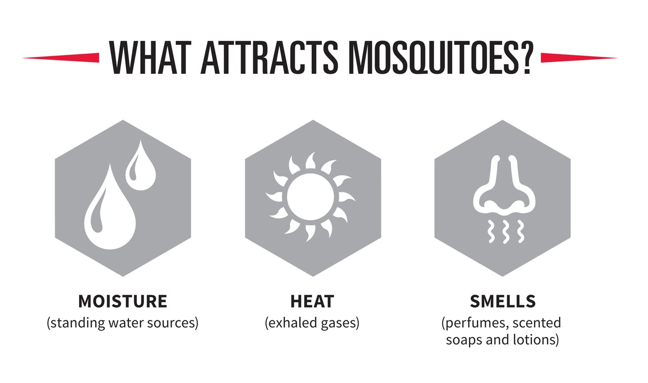 what-attracts-mosquitoes